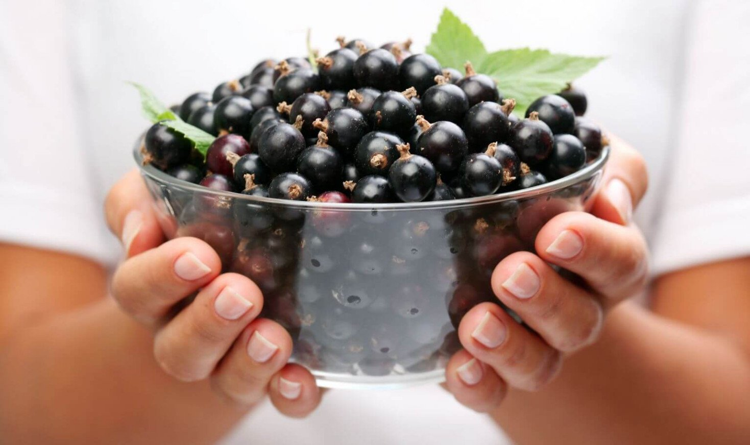 Польза белой смородины: состав, калорийность и возможный вред для здоровья