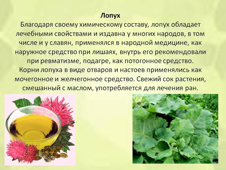 7 трав, которые лечат не хуже таблеток
