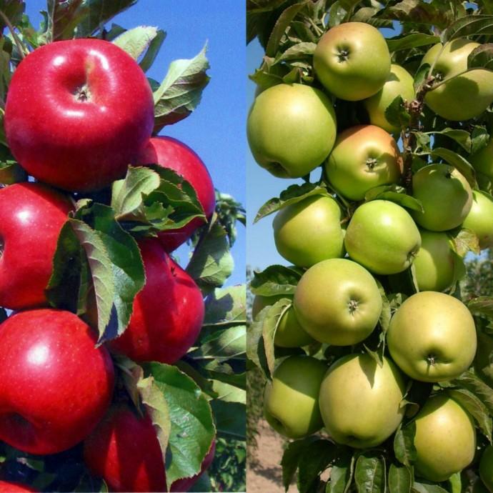 Лучшие сорта колоновидных яблонь для подмосковья с описанием, характеристикой и отзывами, а также особенности выращивания в данном регионе