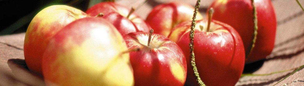 Яблоня коробовка: описание сорта, фото, отзывы