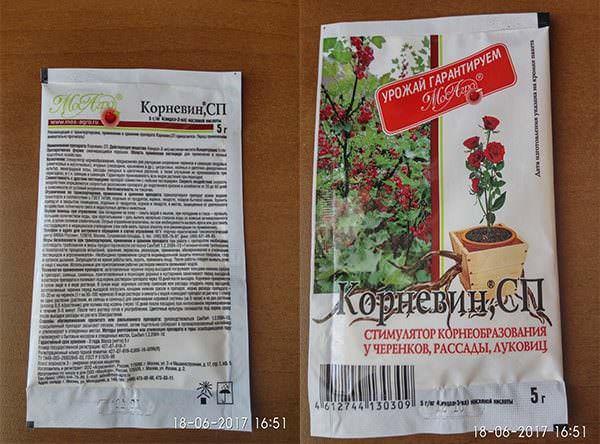 Корневин: применение для стимуляции роста растений, инструкция, свойства - почва.нет