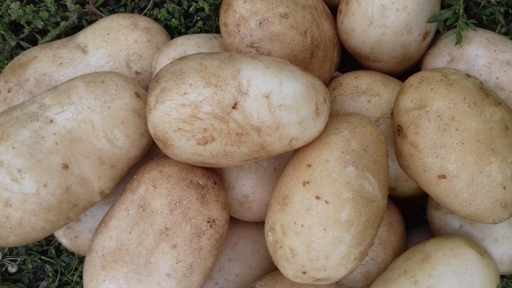 Картофель василек: описание сорта, фото внешнего вида, преимущества и недостатки, отзывы дачников