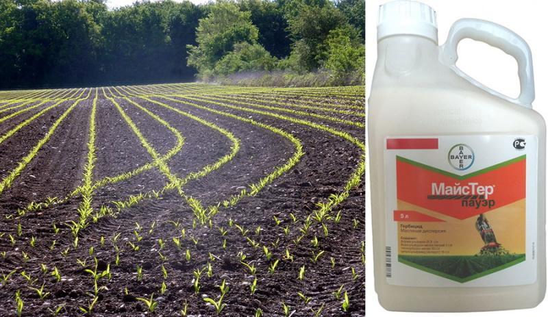 Гербициды по пшенице: обзор и описание препаратов для обработки от сорняков