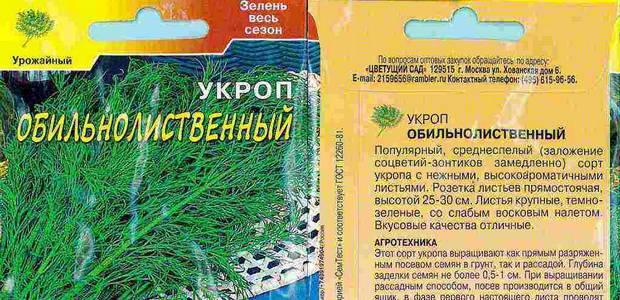Свежий укроп на столе всё лето. посадка, сорта, выращивание. фото — ботаничка.ru