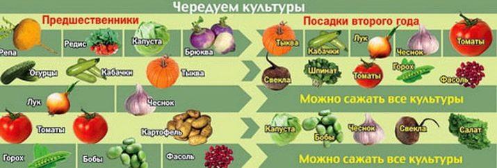 После каких культур (овощей) лучше сажать чеснок под зиму: правила севооборота