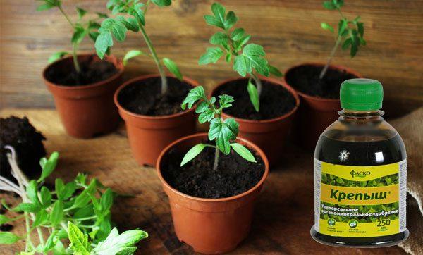 Чем и когда подкормить рассаду перцев при выращивании в домашних условиях и пересадке в открытый грунт: лучшие удобрения и их состав