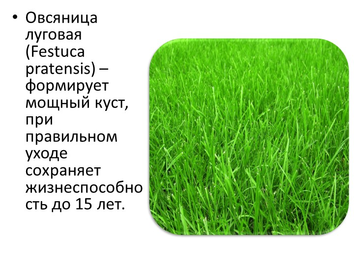 Какую траву выбрать для посадки газона