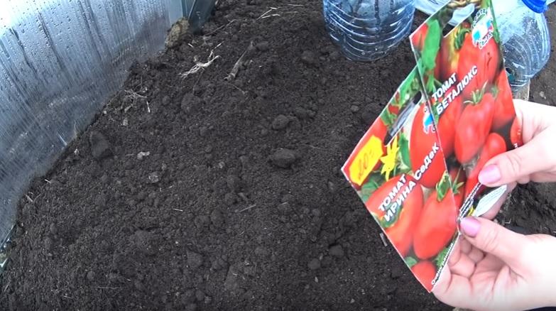 Посадочные дни для томатов для теплицы на 2021 год по лунному календарю