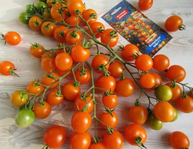 Черри элизабет f1: раннеспелый гибрид с большим потенциалом. описание томата и советы по выращиванию