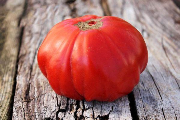 4 десятка самых урожайных и вкусных сортов томатов сибирской селекции