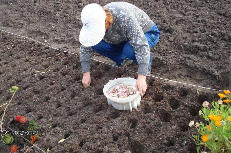 Подготовка грядки под чеснок: секреты высоких урожаев