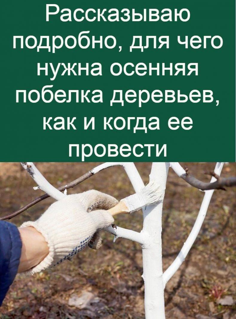 Как правильно производить побелку деревьев