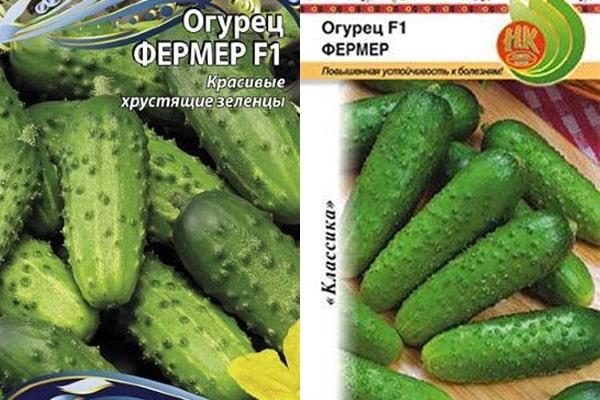 Огурец амур f1: отзывы, описание, фото, семена