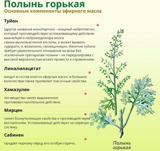 Денежное дерево: уход и выращивание в домашних условиях - sadovnikam.ru