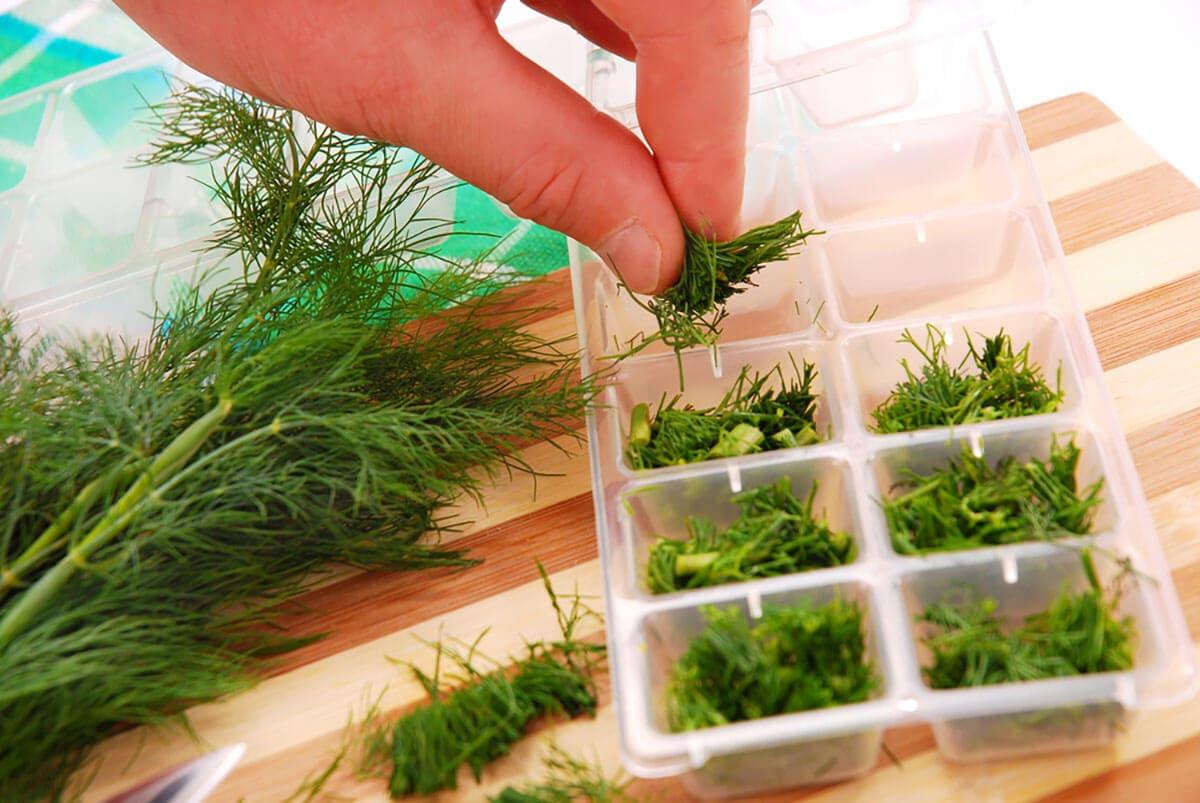 Как сохранить зелень в холодильнике свежей и долго