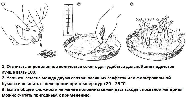 Как проверить всхожесть семян в домашних условиях