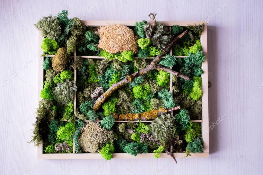 Декоративный мох для сада - 135 фото выращивания и советы как сделать мох своими руками