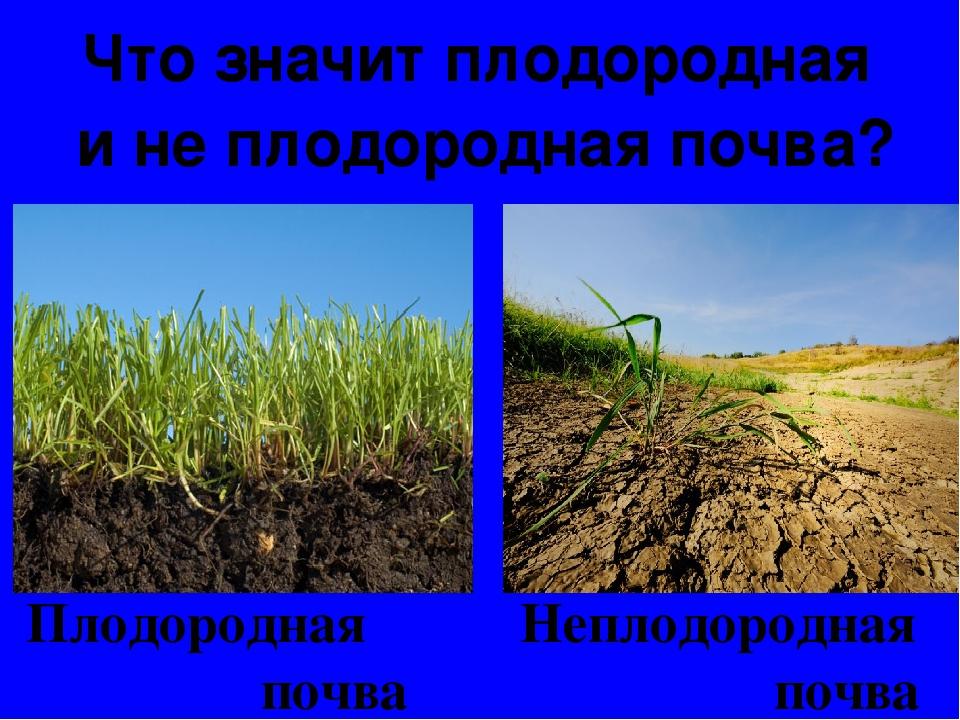 Топ-8 способов как повысить плодородие почвы