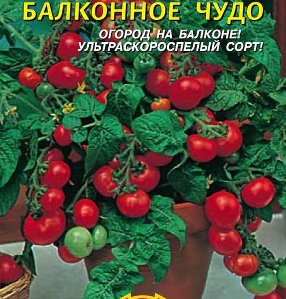 Знакомство с сортом помидоров «балконное чудо». практические рекомендации по выращиванию и уходу дома и на огороде
