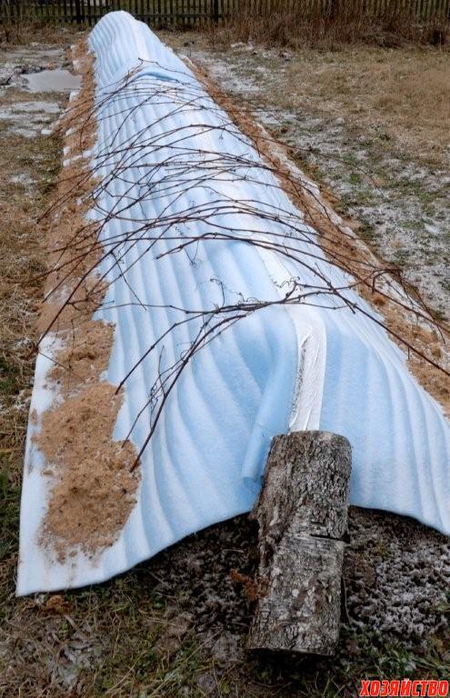 Укрытие яблонь на зиму – советы садоводов