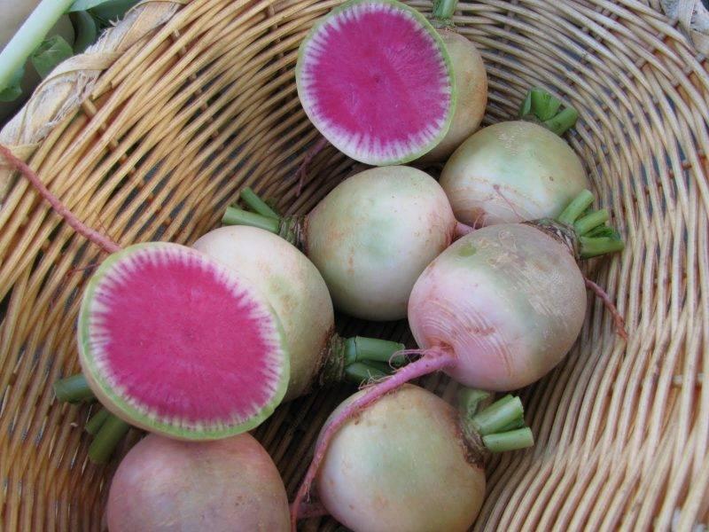 Выращивание дайкона – добавьте немного дзена в свой огород! — agroxxi