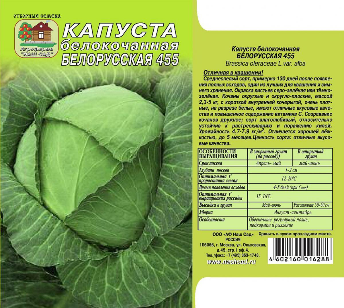 Характеристика капусты Белорусская 455, выращивание, сбор и хранение