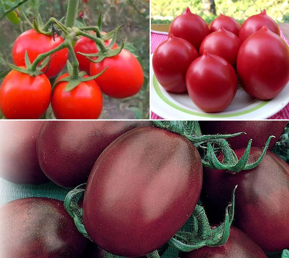 Лучшие сорта томатов для урала