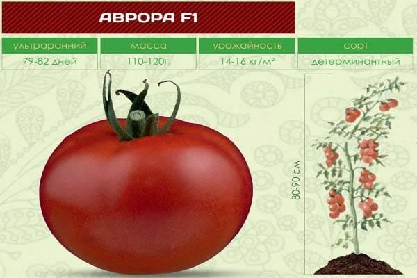 Томат антюфей f1 от фирмы партнер: характеристика и описание сорта, фото, отзывы