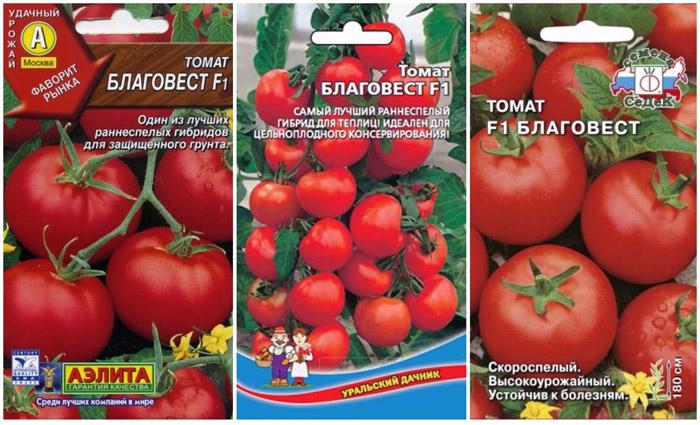 Сорт помидор благовест: описание, характеристики, фото