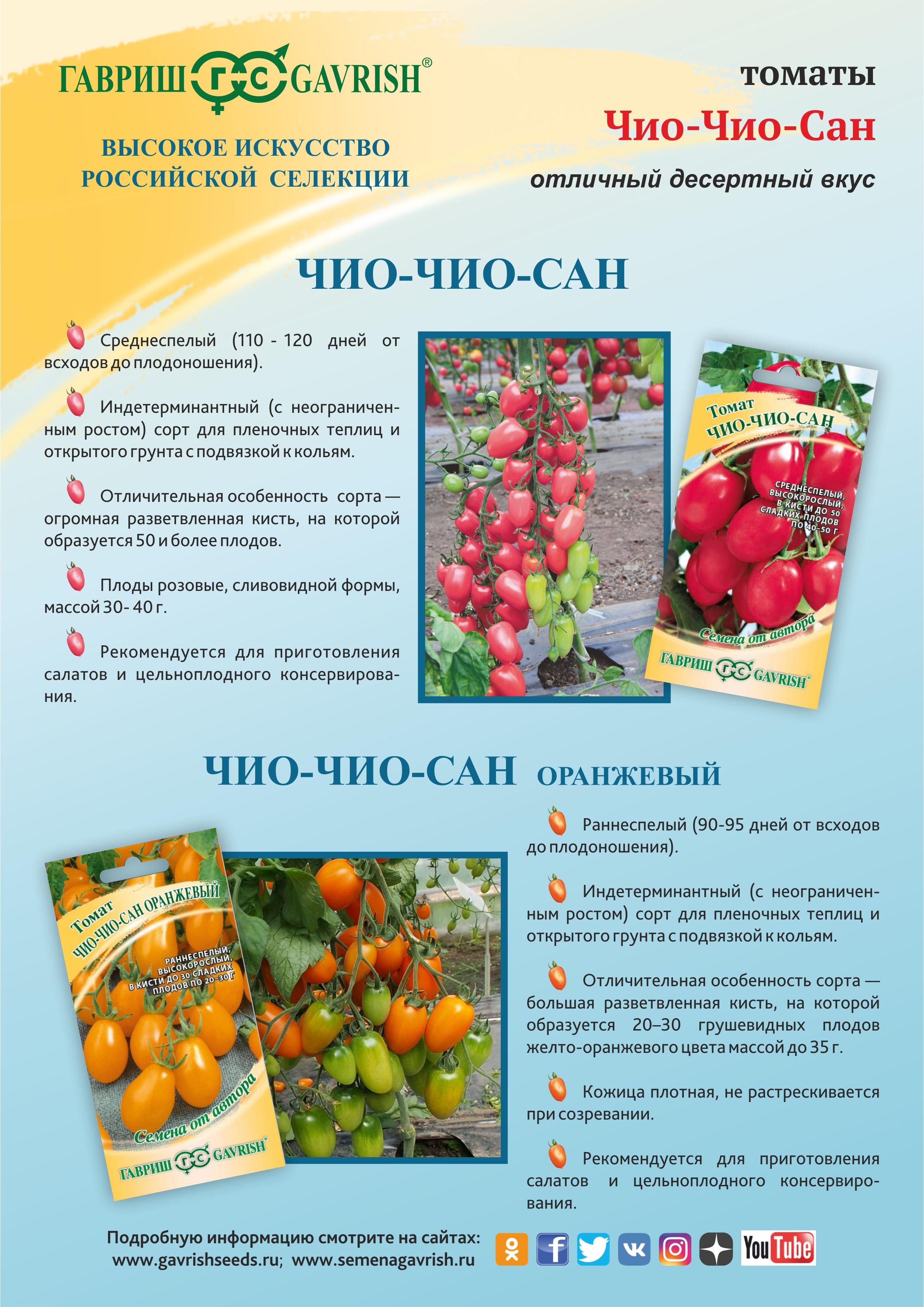 Томат чио чио сан: описание сорта, отзывы, фото, урожайность | tomatland.ru