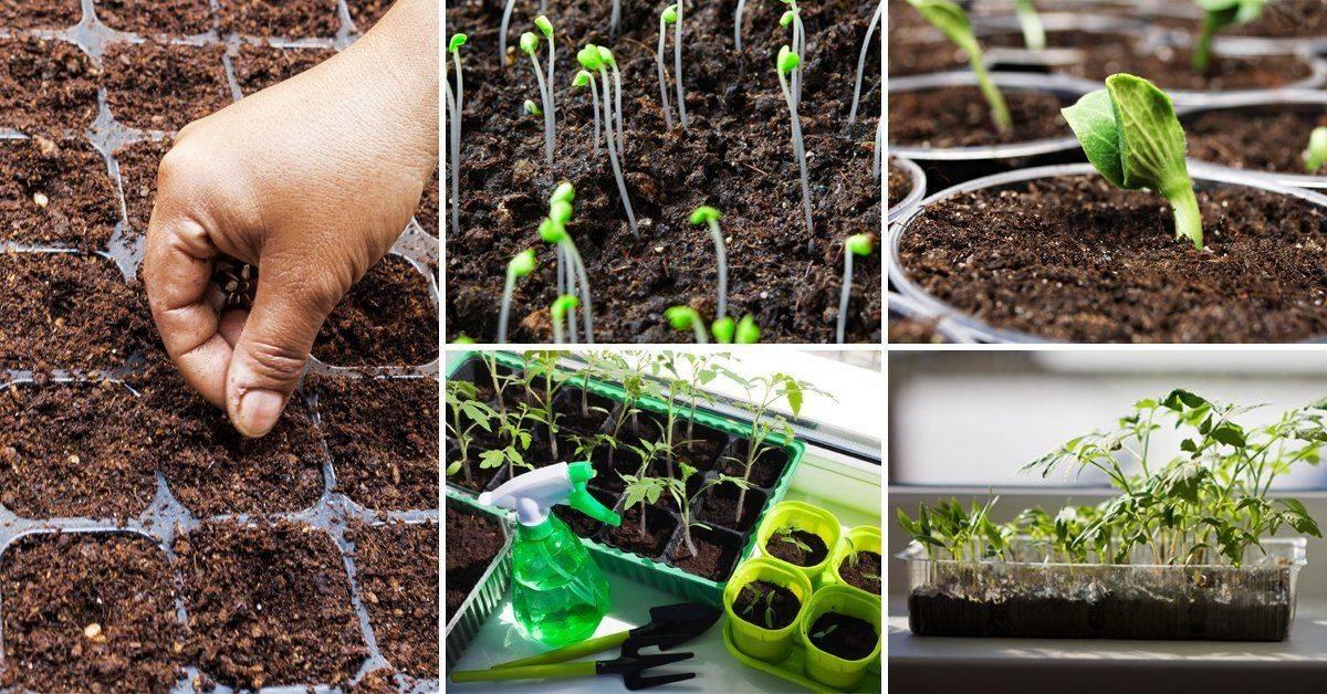 Выращивание рассады и овощей на гидропонике