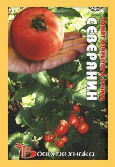 Сорт для холодного климата — томат таймыр: характеристики и описание, отзывы об урожайности