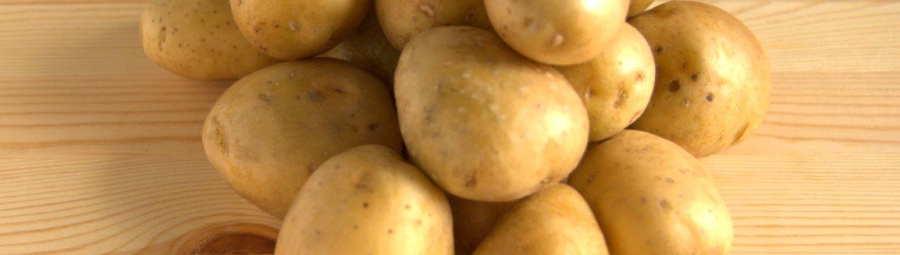Особенности выращивания и характеристики картофеля сорта импала
