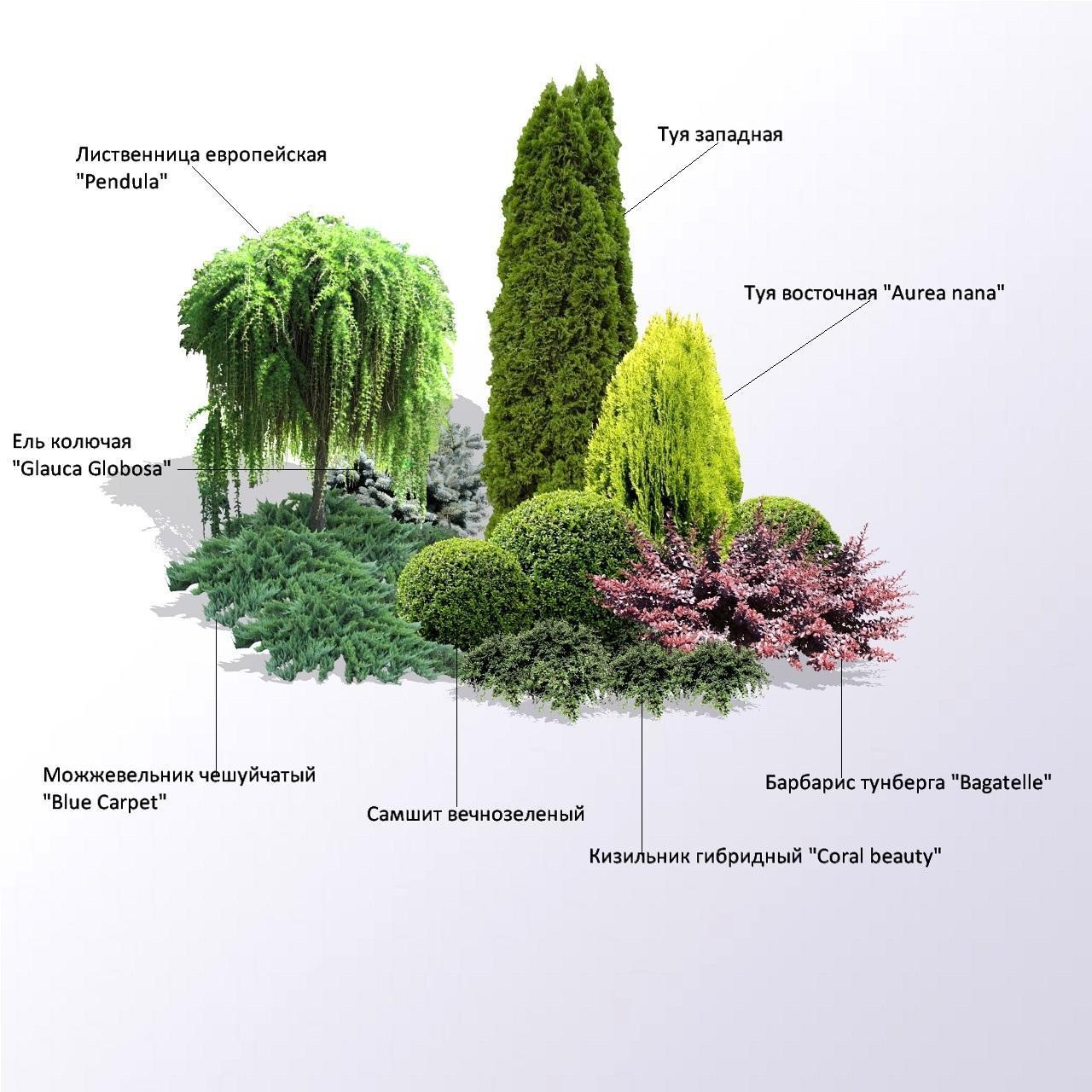Композиция из деревьев и кустарников - в рассаде