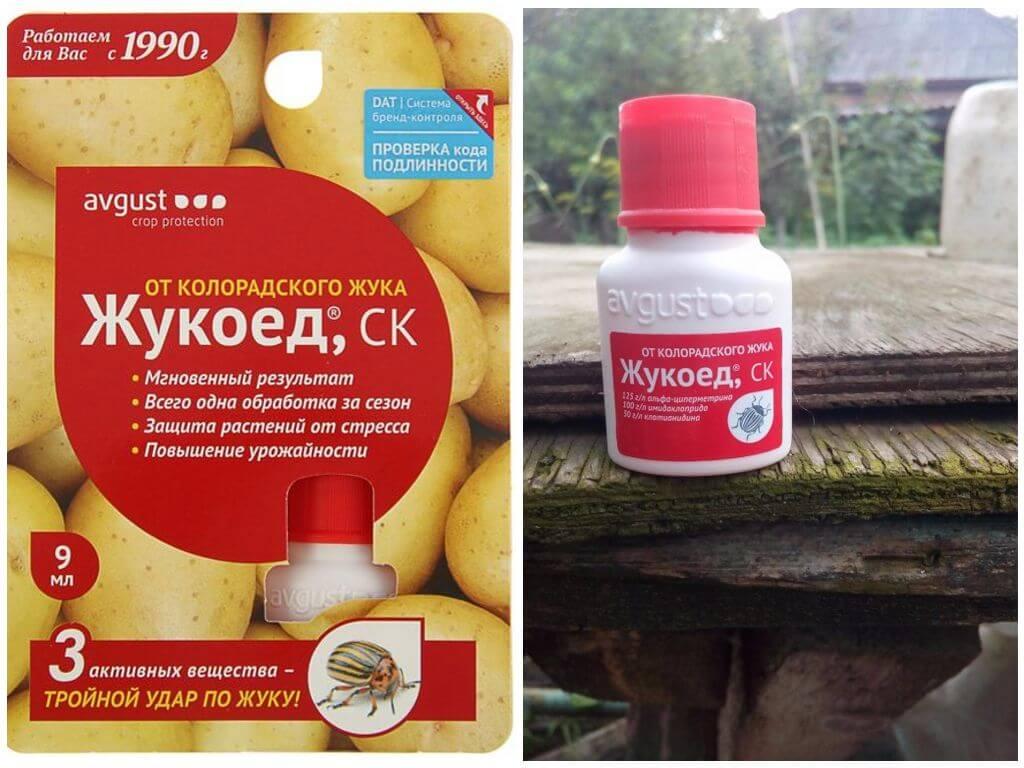 Жукоед от колорадского жука: инструкция по применению - сельская жизнь