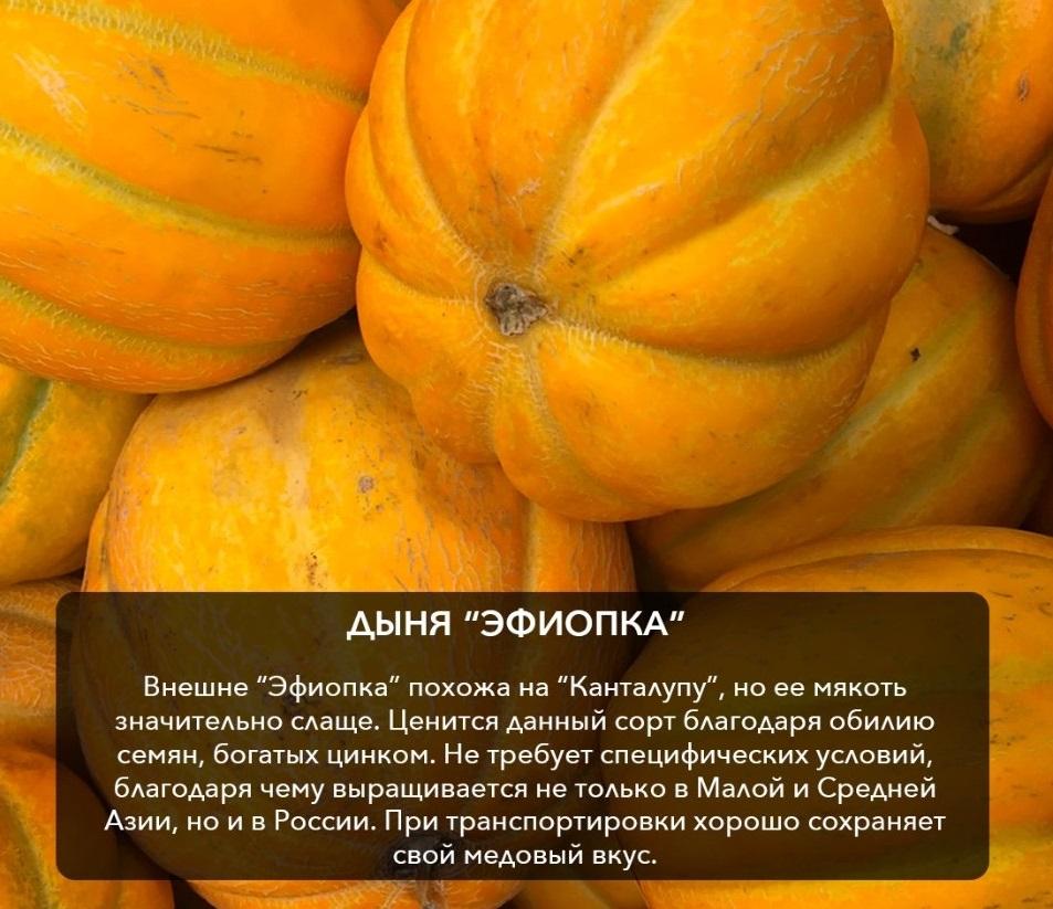 Дыня эфиопка: описание и характеристики сорта с фото, выращивание, отзывы
