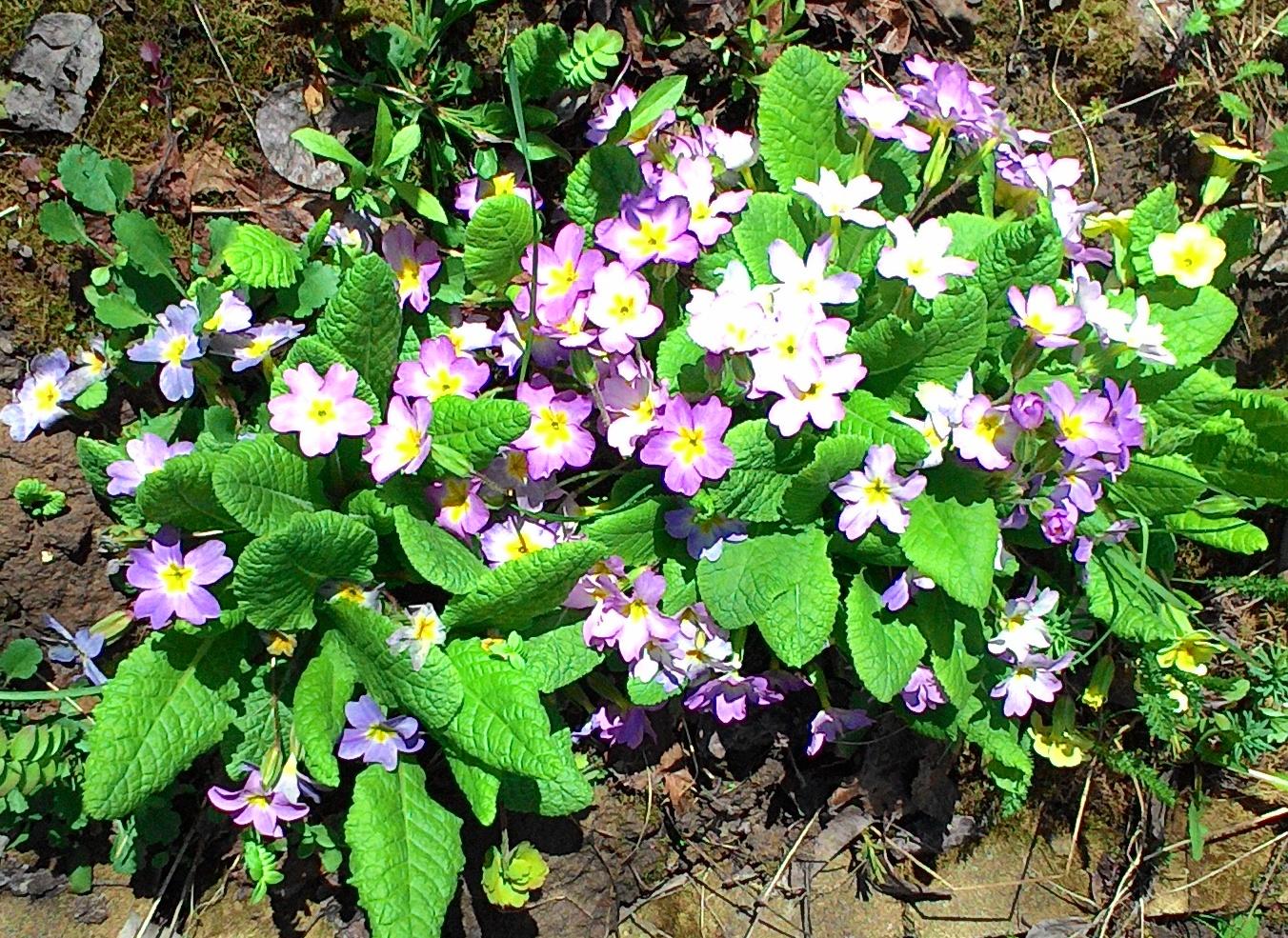 Сорта однолетних цветов, цветущих все лето: посадка и особенности ухода