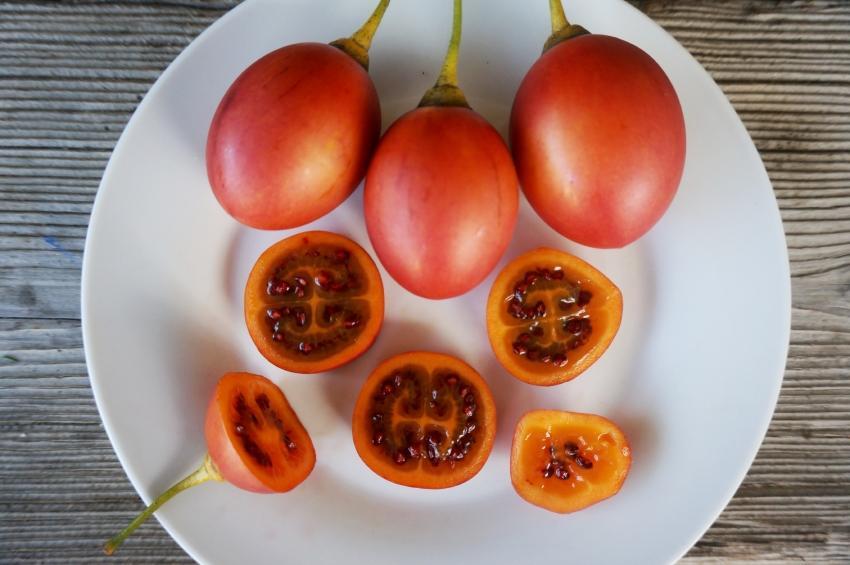 Тамарилло фрукт (томатное дерево)