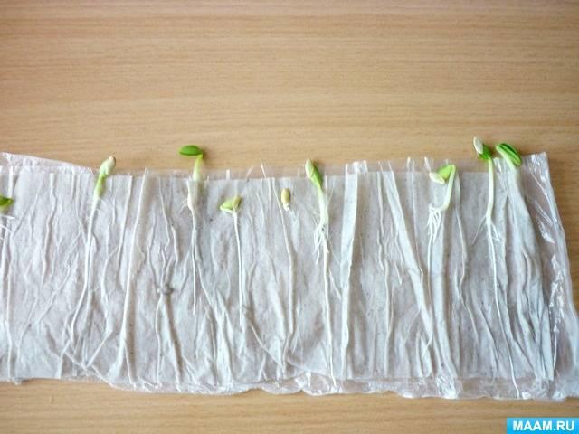 Как правильно посеять семена помидор на рассаду в домашних условиях