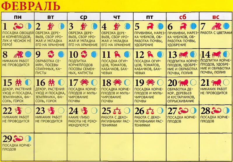 Посев помидор на рассаду в 2021 году по лунному календарю: когда сажать, сроки