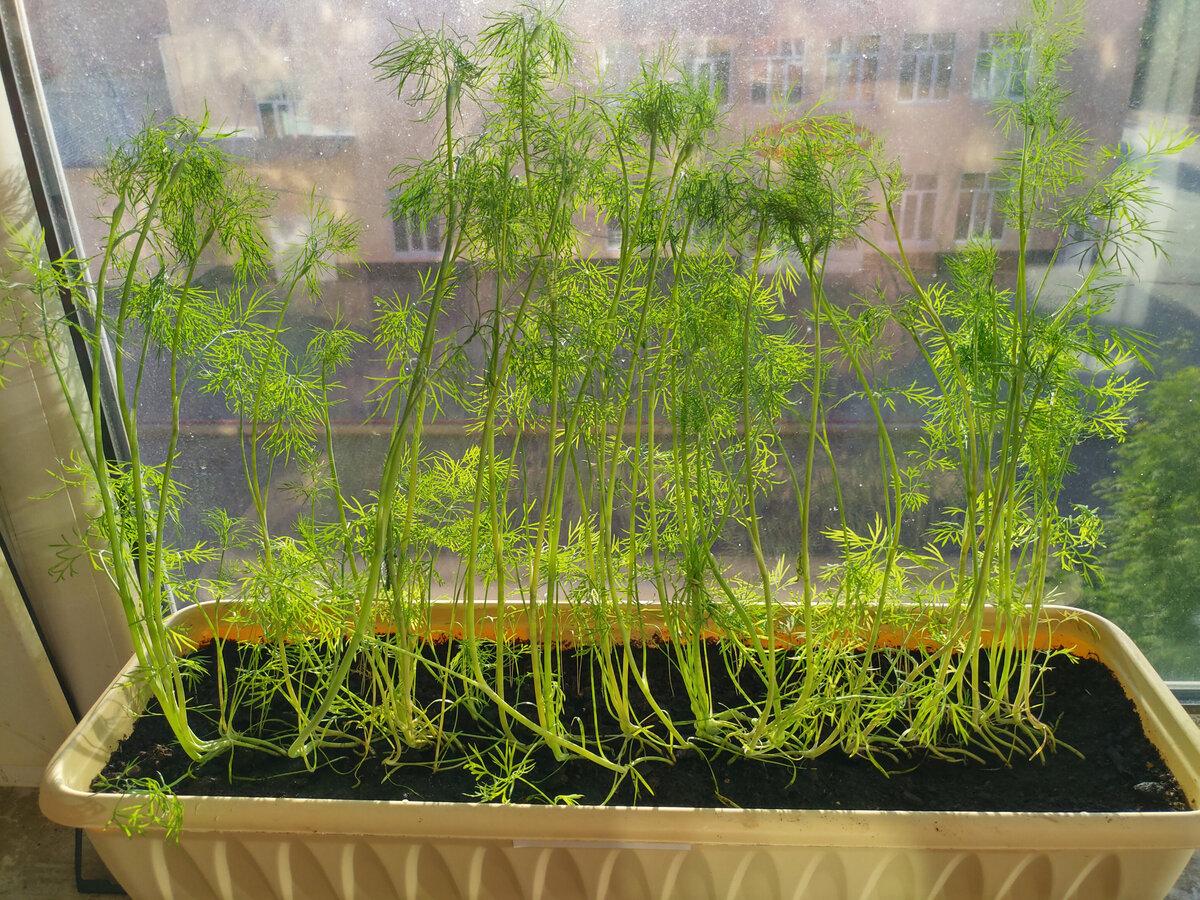 Выращивание зелени в теплице как бизнес: 4 плюса