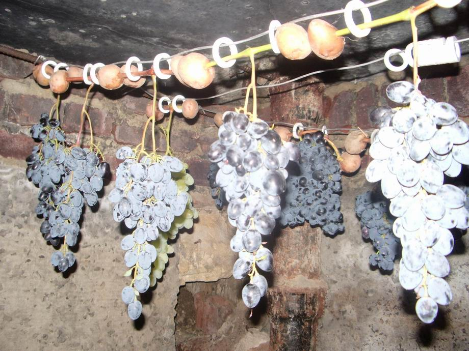 Правильная заготовка черенков винограда осенью и хранение до весны
