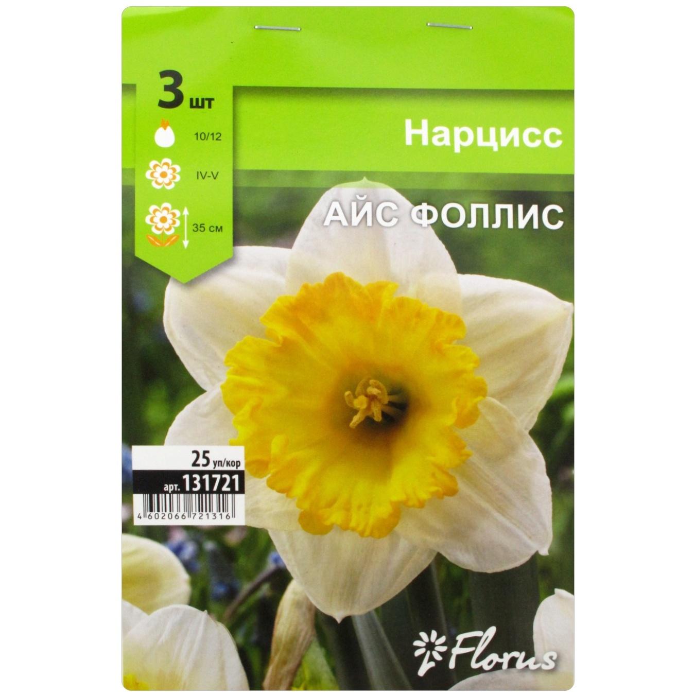 Описание и характеристики нарцисса сорта реплит, выращивание и уход