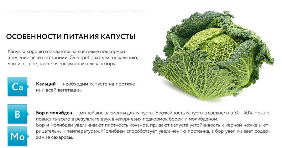 Удобрения для капусты (белокочанной и цветной)