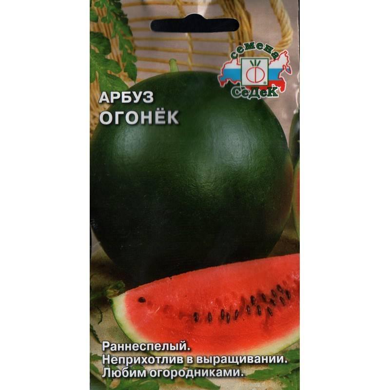 Особенности выращивания арбузов в сибири, в том числе в открытом грунте, а также какие сорта выбрать для данного региона