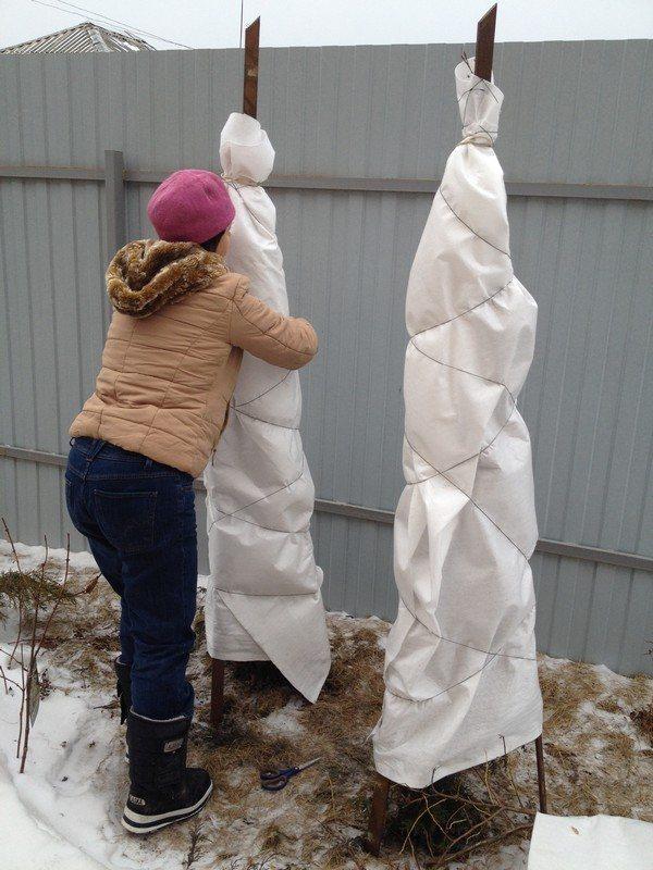 Раскрываем деревья после зимы: сроки и важные правила
