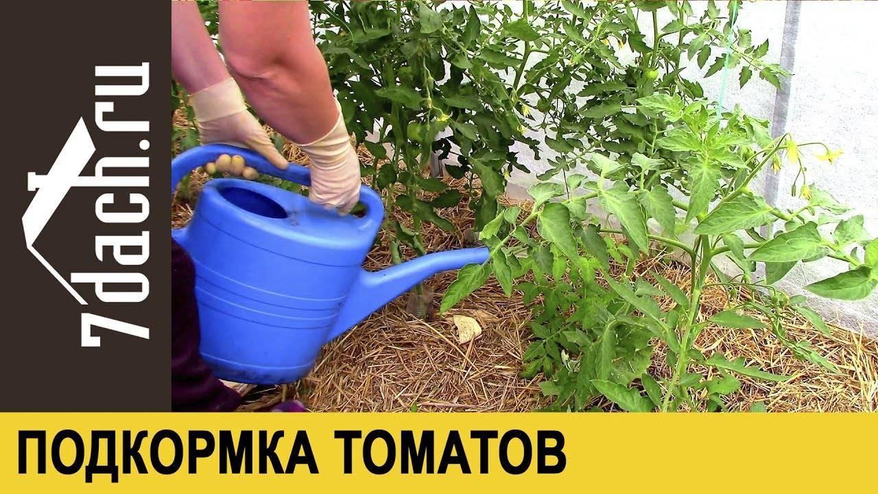 Зола для помидоров: как подкормить рассаду и сколько вносить?