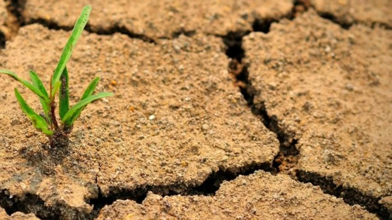 Влияние обработки почвы на плодородие и агрофизические свойства