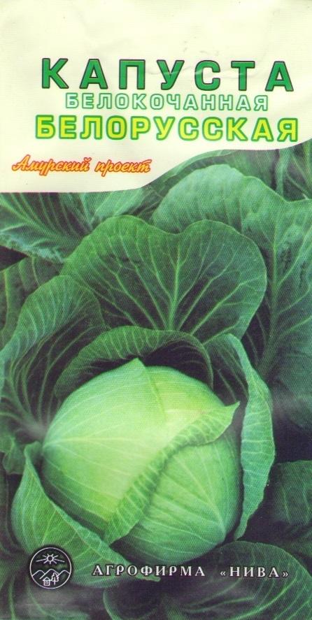 Капуста белорусская 455: описание сорта, урожайность, отзывы