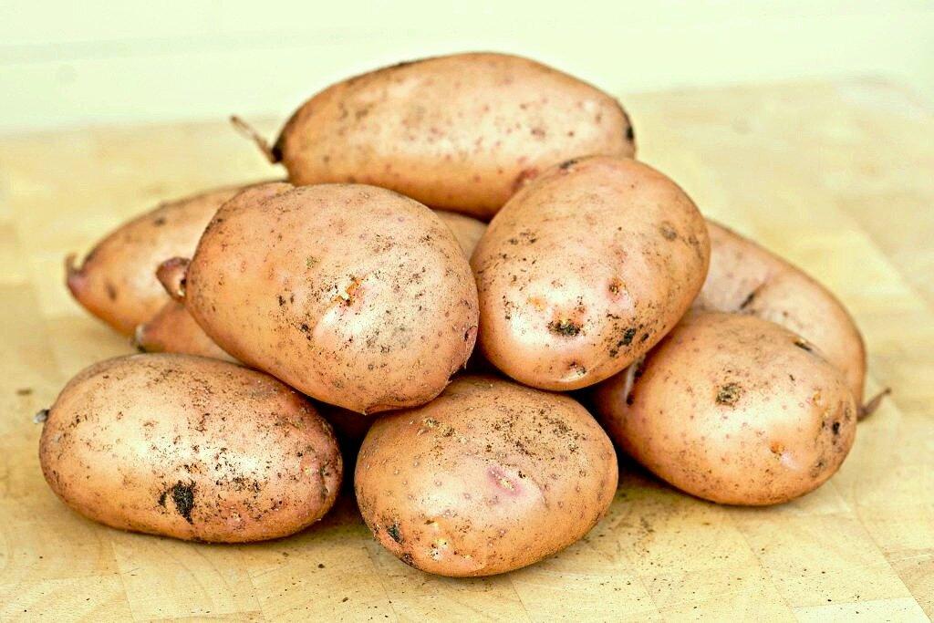 ᐉ сорт картофеля «утро» – описание и фото - roza-zanoza.ru